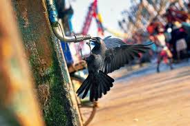 photo essay the heat is on livemint a thirsty crow pecks on a dry tap at the putiyappa fishing harbour in kozhikode