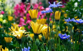 Small Picture Flower In Garden Wallpaper flower garden wallpaper flower