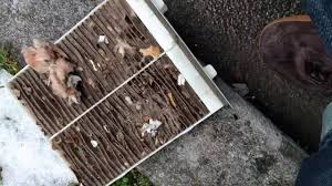 Mouse Nest in Cabin Air Filter - YouTube