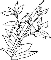 Camouflage Coloring Pages Camouflage Coloring Pages Printable Hidden