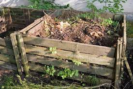 10 things you should not put in your compost pile