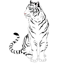 Tiger Eyes Drawing White Tiger By