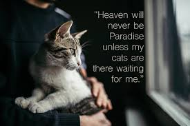 Image result for new week wishes with kitties