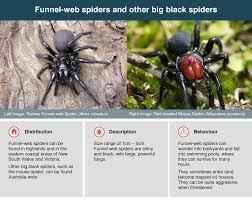 Spider Identification Chart Australia Spider Bites Healthdirect