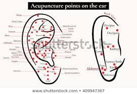 Ear Acupuncture Chart Free Acupuncture Points Map