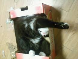 no box is too small no space too confined