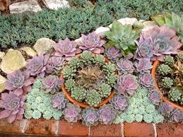 Small Picture Succulent Gardens Garden Design Succulent Garden Designs Image