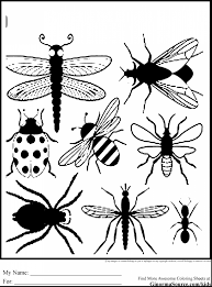 Small Picture Bugs Coloring Pages Printable Bug Insect In Free glumme