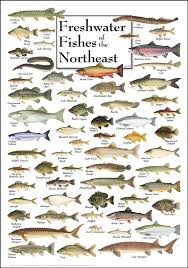 Florida Fish Identification And Size Freshwater Fish In