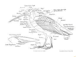 Slug anatomy diagram animal bird of a snipe
