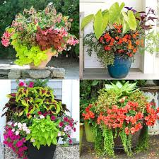 container garden planting lists