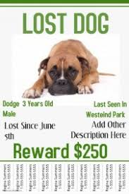 Lost Pet Flyer Maker Customizable Design Templates for Missing Poster PosterMyWall 100