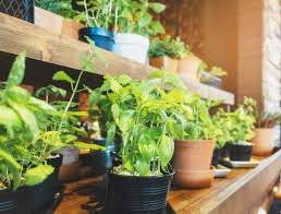 an abun of research suggests that growing your own food is a more healthy and more sustainable alternative to picking up your fruits veggies