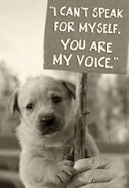 Animal Rights Quotes on Pinterest | Animal Rights, Quotes About ...