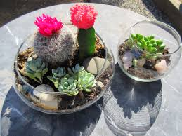 diy succulent terrarium sustainable daisy thrifting environmental step by step