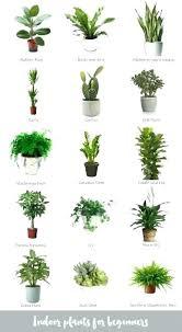 office plants for sale. Modren Plants Related Post Throughout Office Plants For Sale C