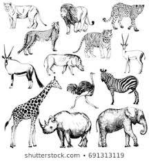 Pen Sketch Animal Images Stock Photos Vectors Shutterstock