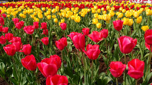 flower wall paper download flower wallpaper pexels free stock photos