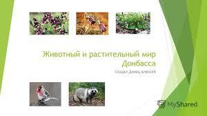 Презентация на тему Животный и растительный мир Донбасса  1 Животный и растительный мир Донбасса Создал Донец Алексей