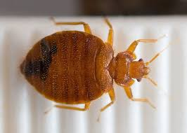 Bed Bugs In Bathroom Amazing How To Get Rid Of Bed Bugs The Signs That Say You Have Them And