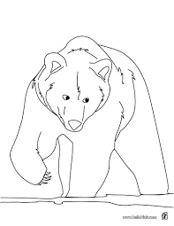 Brown Bear Coloring Page More Forest