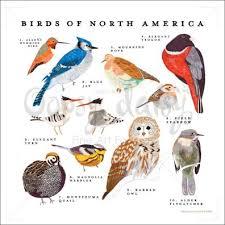North America Birds Ornithology