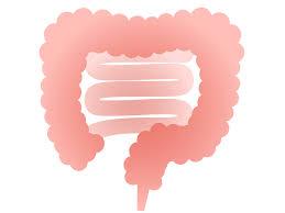 「大腸」の画像検索結果