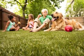artificial grass for pets. Artificial Grass For Dog Owners \u2013 Polyurethane Backing And Envirofill Pets