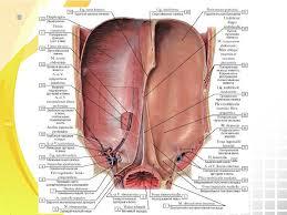 Категория Умершие от цирроза печени известные люди умершие от   инфекционного характера причиной которых является снижение иммунитета Стеатогепатит воспалительный процесс печени на фоне его жирового перерождения