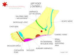 external foot diagram structure   anatomy human body    diagram  middot  foot areas structure for external foot