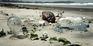 Image result for environmentalists cleaning the beaches