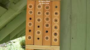 Mason Bees   Adventures in Natural BeekeepingMid June    Tubes are filled  I should take them down carefully