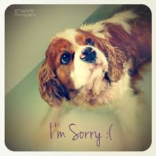 i m so sorry