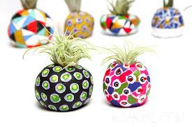 air plant pots