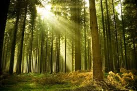 Image result for photos of forests trees