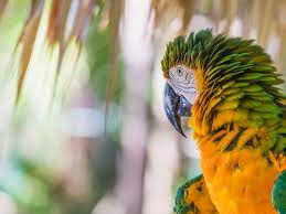 Catalina Macaw — Full Profile, History, and Care