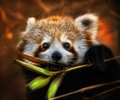 7 Just cool ideas | animals wild, cutest animals on earth, baby ...