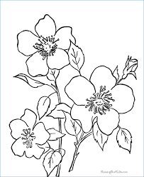 Basic Flower Coloring Pages At Getdrawingscom Free For Personal
