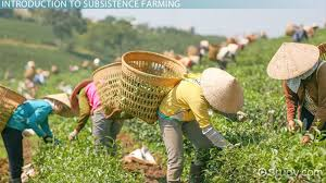 what is the green revolution definition benefits and issues subsistence farming definition examples