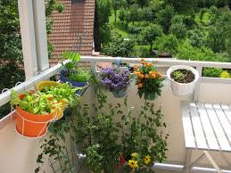 Urban Garden On An Apartment Balcony