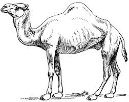 Small Picture Dromedary camel coloring page