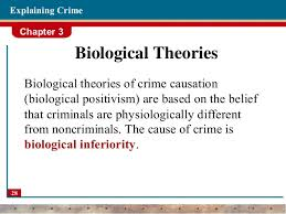Biological Theory Theories Of Crime Criminology
