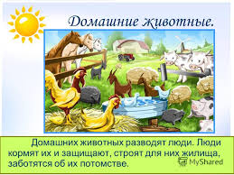 Презентация на тему Животные дикие и домашние Окружающий мир  5 Домашние животные Домашних животных разводят люди Люди кормят их и защищают строят для них жилища заботятся об их потомстве