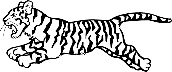 baby tiger clipart black and white. Brilliant Tiger 1519x642 White Tiger Clipart Printable Inside Baby Clipart Black And B