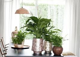 Pflanzen Im Schlafzimmer Schadlich Booxpw