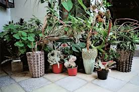 Picture Of stylish mexican patio with lush greenery and potted plants 2