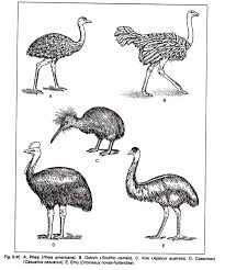 Classification Of Birds Class Aves