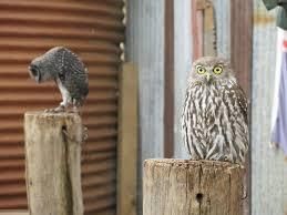 essay owl purdue persuasive essay owl purdue