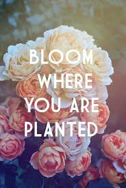 Beautiful Quotes About Life And Flowers Best Of 24 Flower Quotes Life Quotes Humor Garden Your Inspiration