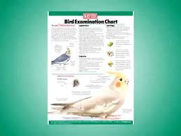 Cockatiel Chart Is Your Bird Sick